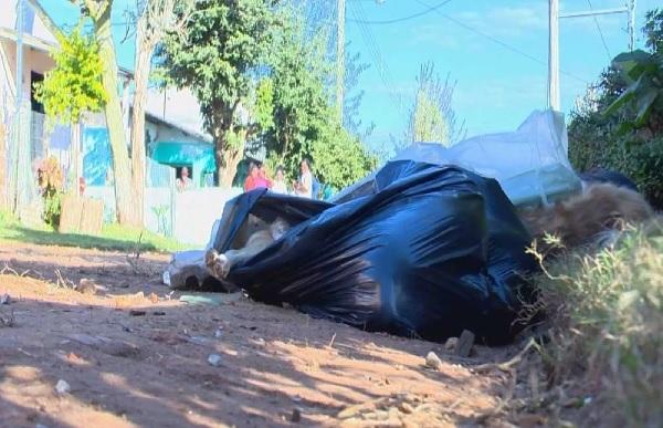 Pelo menos 30 cães são encontrados mortos em Cachoeira do Sul