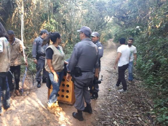 Onça encontrada em empresa é solta na Reserva do Morro Grande