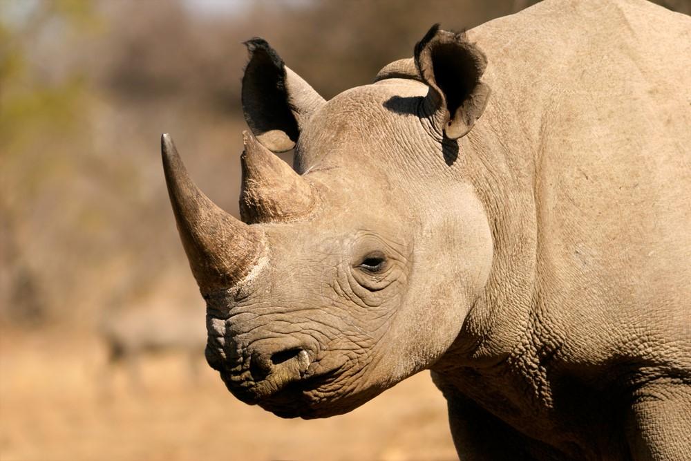Rinoceronte-negro – 350 mil dólares