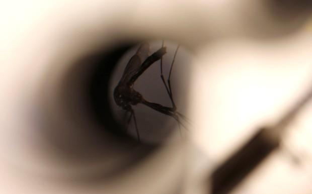 Caso de zika aponta possibilidade de transmissão por beijo ou sexo oral