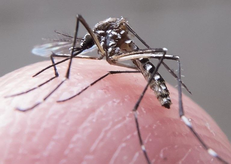 Planos de saúde terão de cobrir teste para o zika vírus