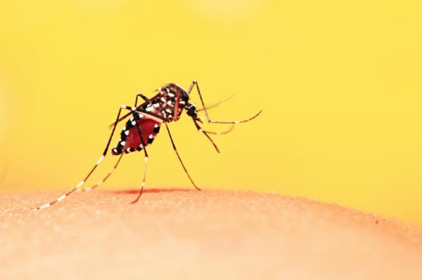 OMS faz alerta sobre risco de circulação da febre amarela na América do Sul