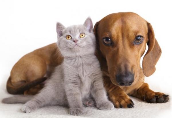 Cães e gatos podem ganhar registro em Osasco